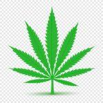 Thema-Cannabis